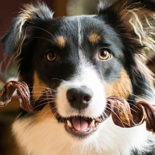 如何正确的给狗狗使用磨牙棒?